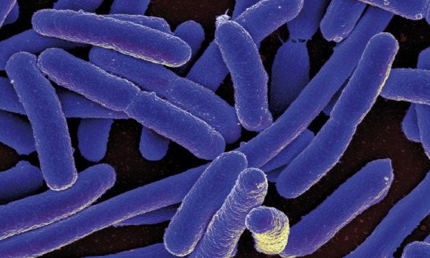 Microbiota intestinale e Parkinson:<BR>il legame esiste